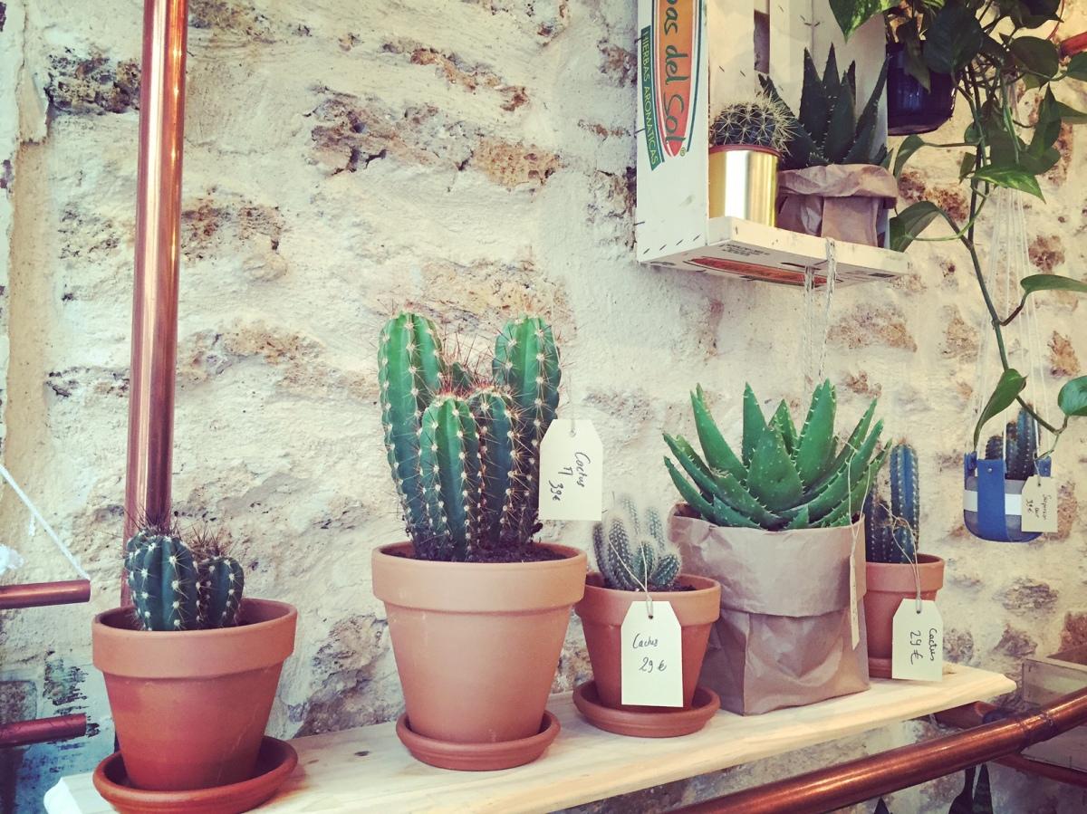 La Grande Serre ou AŸ Cactus : Du vert pour un peu d'air !