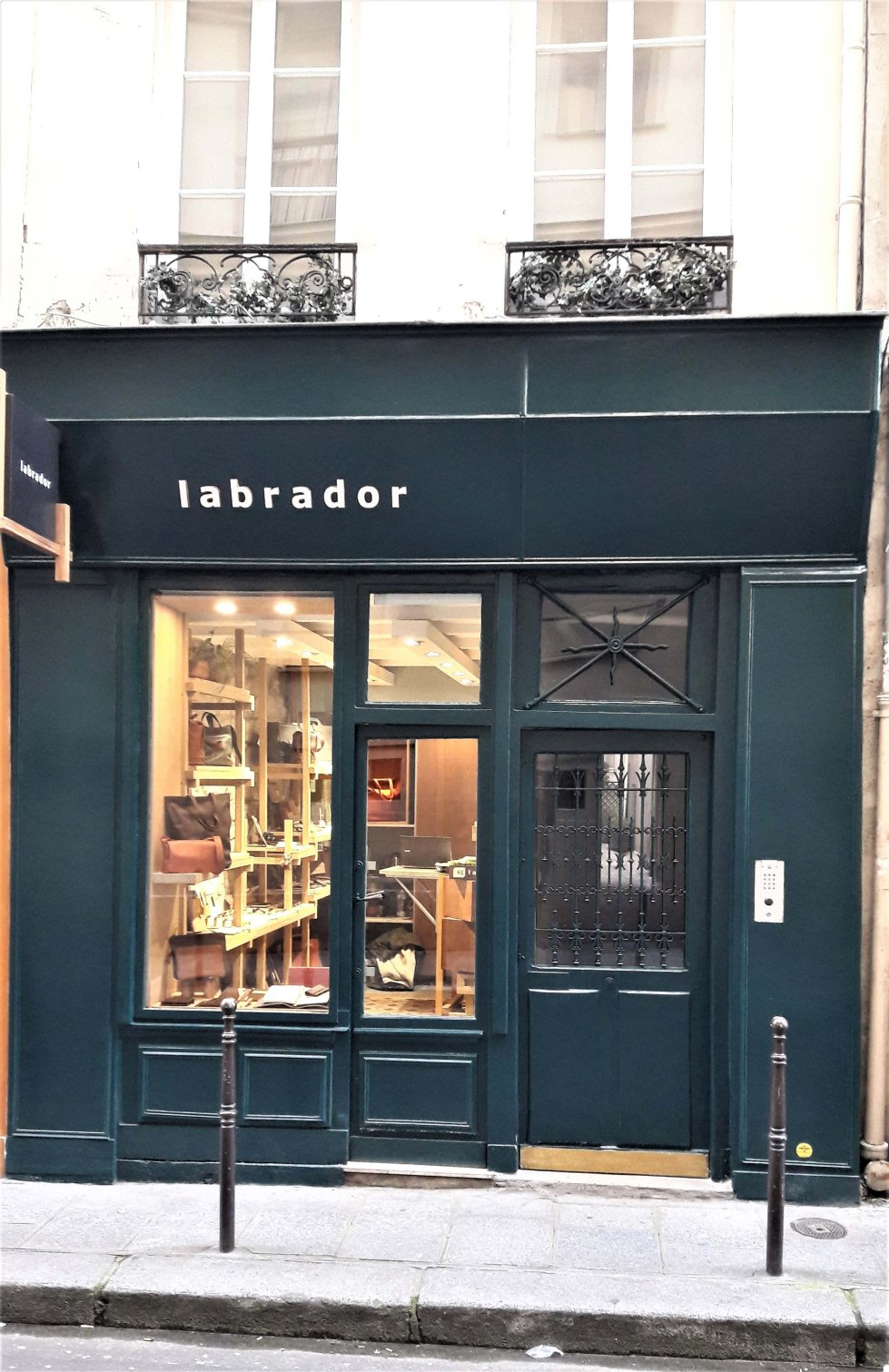 Labrador Paris1